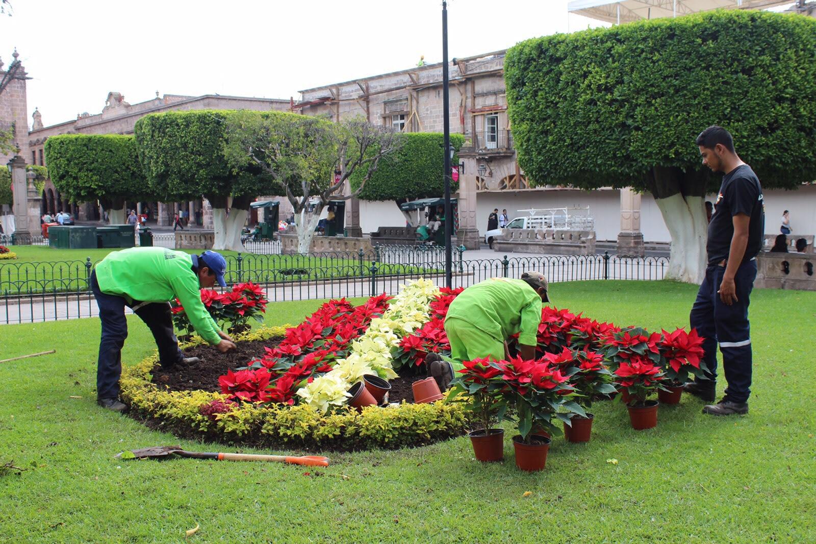 Embellecen jardines de morelia con flores de nochebuena for Decoracion de parques y jardines