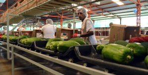 Exportaciones Agropecuarias aumentan 20 por ciento en diciembre de 2013