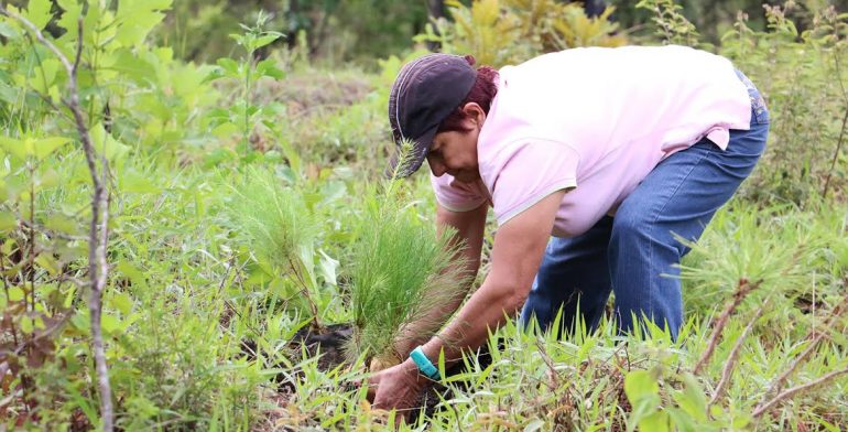 reforestacion-cerro
