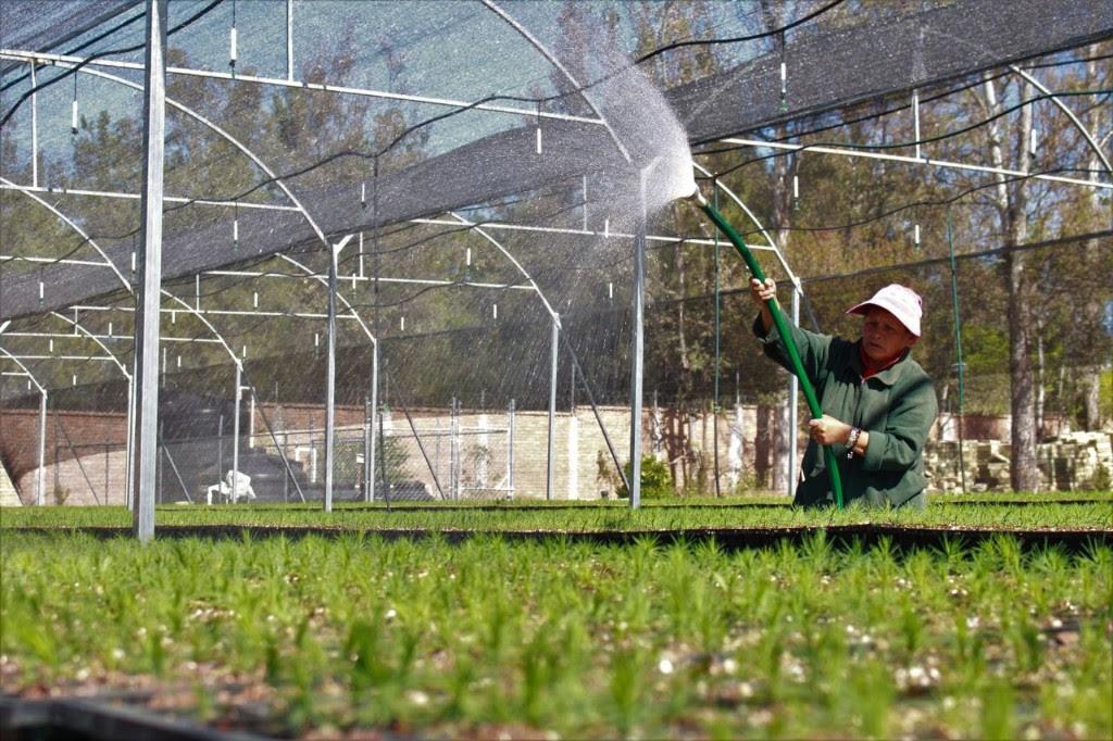 Vivero l zaro c rdenas preservar flora y fauna en for Viveros en zamora