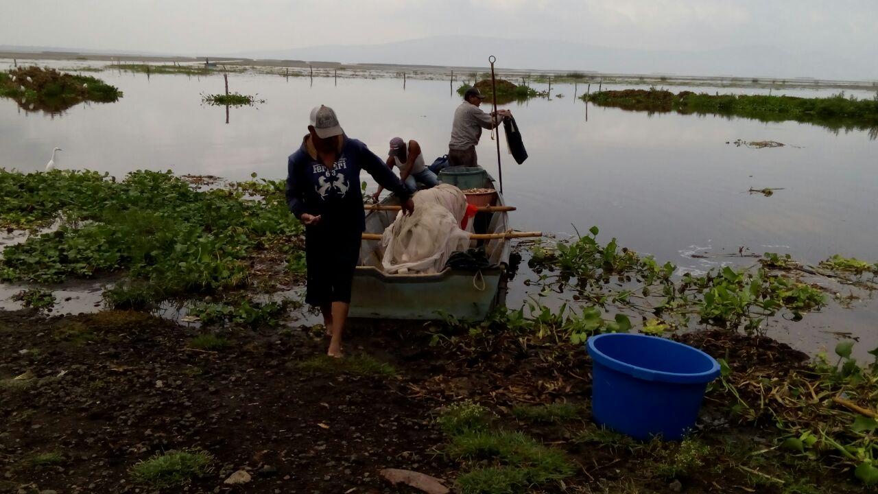 En peligro de extinción 200 especies por desecación del Lago de Cuitzeo -  Quadratín