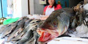 pescado-humanos1