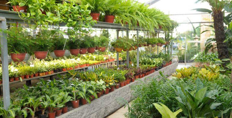 Realiza profepa inspecciones a viveros en michoac n for Que es un vivero de plantas