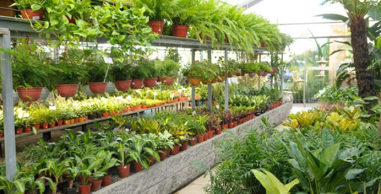 Apuestan por certificaci n de viveros michoacanos for Viveros de plantas