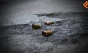 Atacan a elementos de la GN en Tepalcatepec; un muerto y un herido